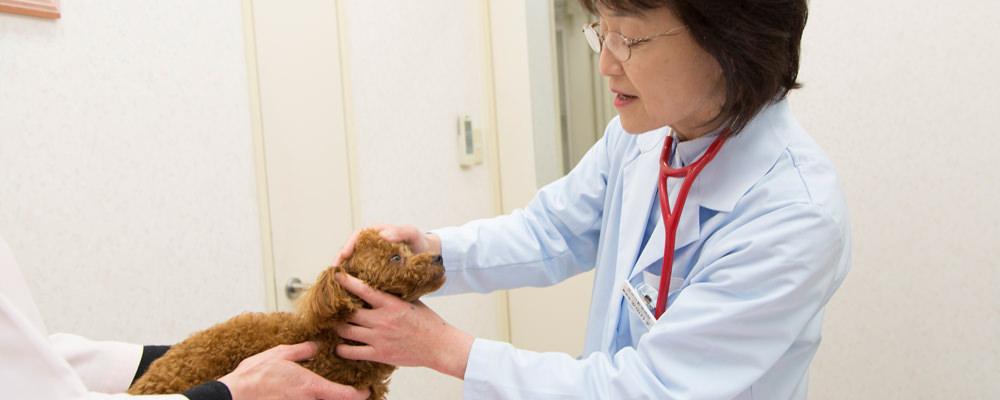 ペットの定期健診と予防