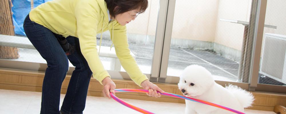 子犬のしつけ教室・飼い方