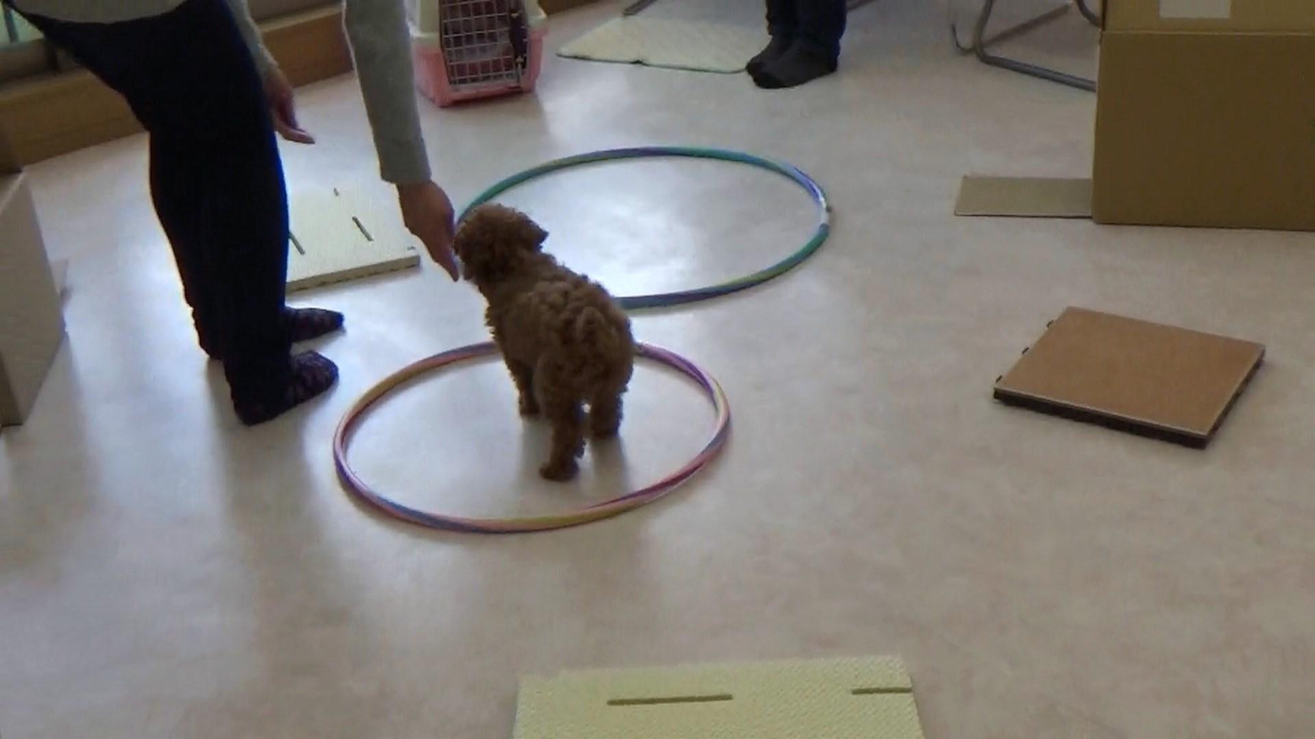 子犬の時期のコミュニケーションスキル