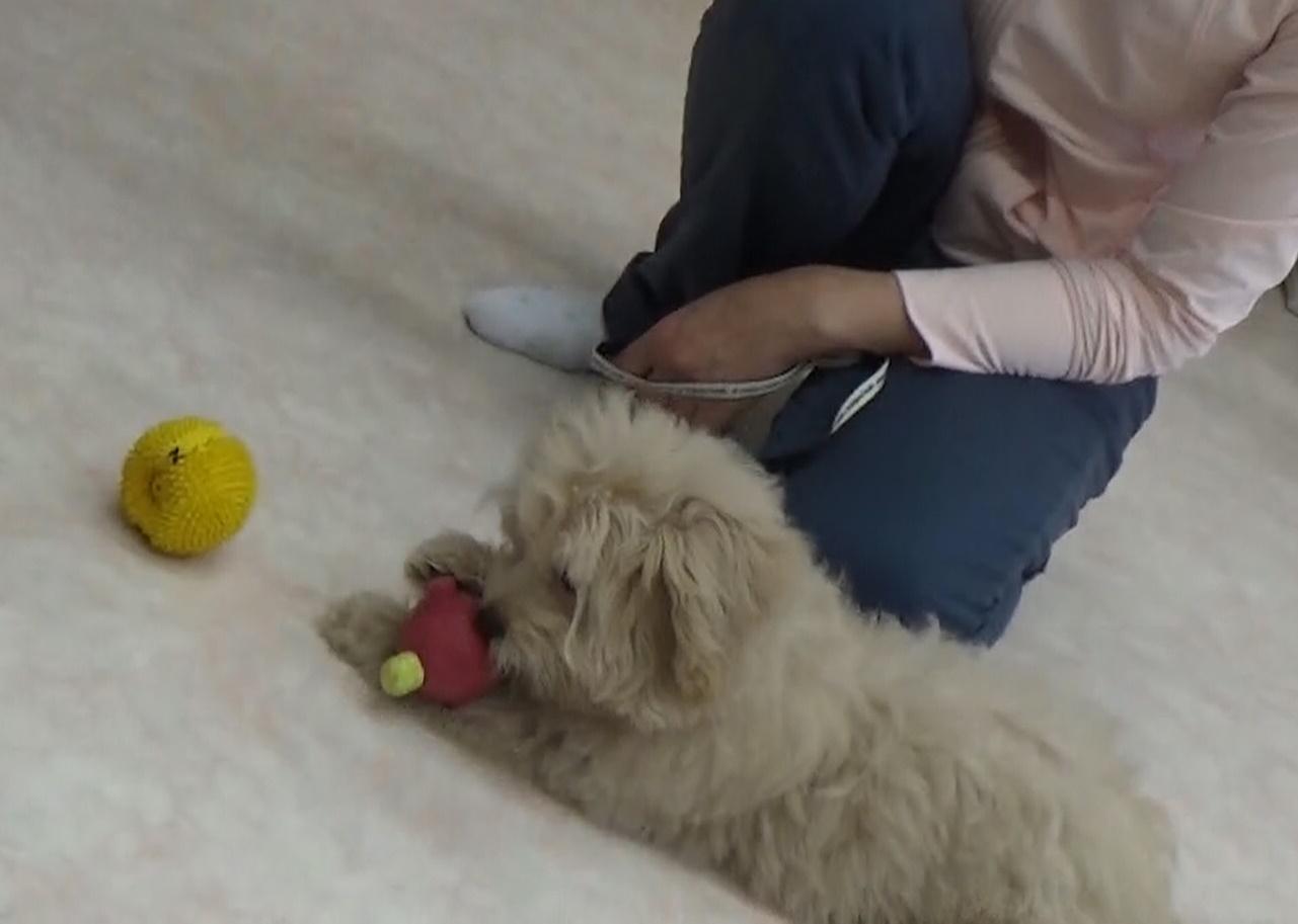 初対面の子犬同士の関わり方