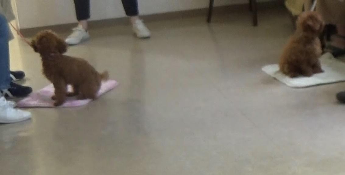 犬との暮らし方教室を開催しました