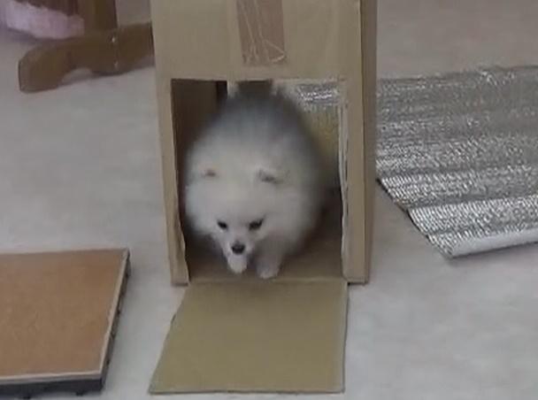 子犬とお正月~今年初めてのパピークラス~