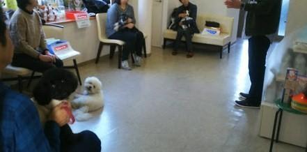 犬との暮らし方教室