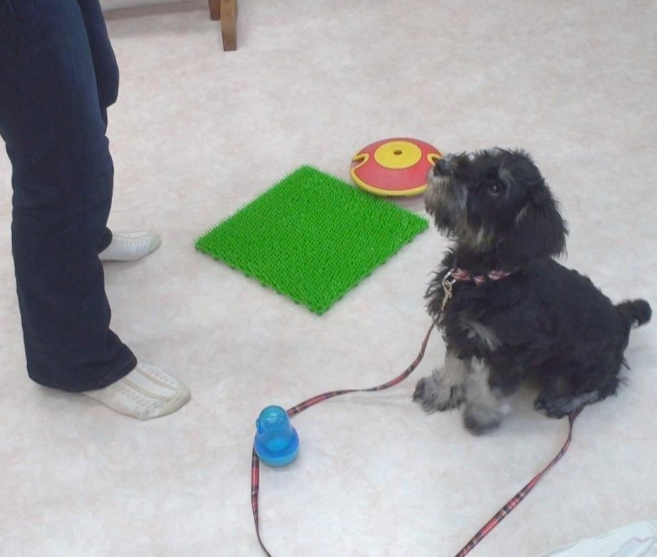 子犬のトレーニング