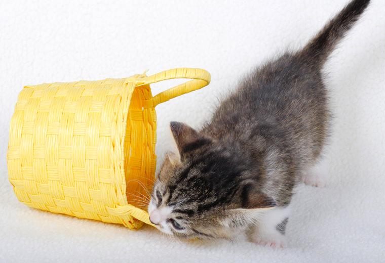 猫が喜ぶオモチャは?